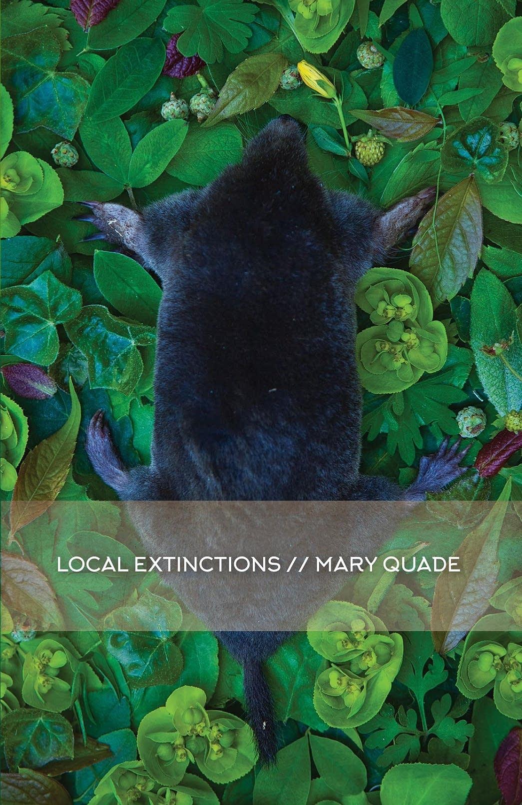 'Local Extinctions' by Mary Quade