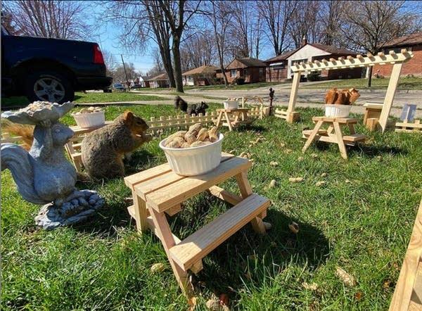Photo of James Vreeland's backyard squirrel restaurant