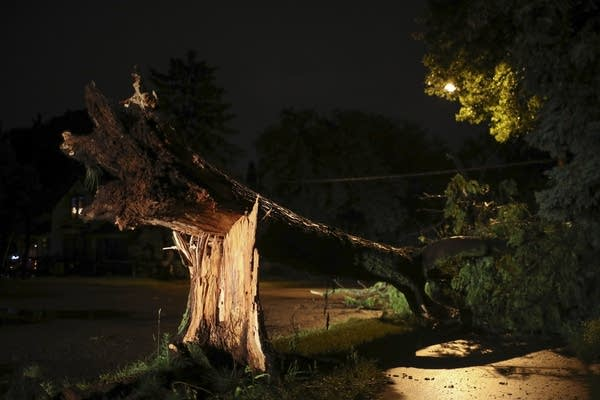 A tree is down on 5th St. NE in Minneapolis.