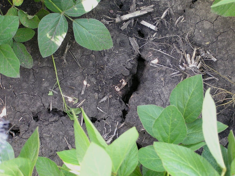 Dry summer soil