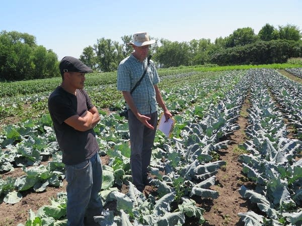 Two people look at crops.