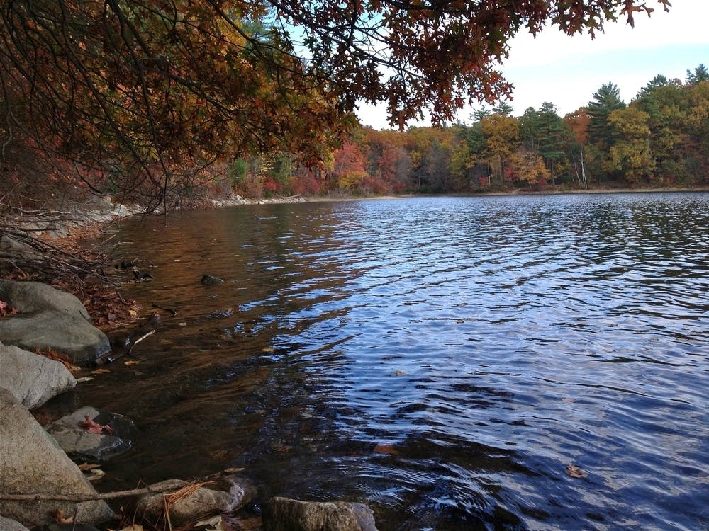 walden pond shoreline in autumn