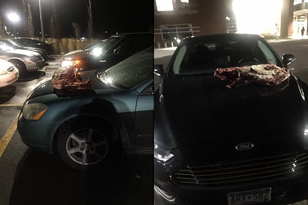 Deer carcasses were left on the hoods of two cars in St. Cloud.