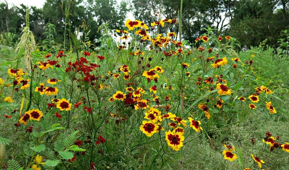 Flowers in a field near Jamestown, N.D.
