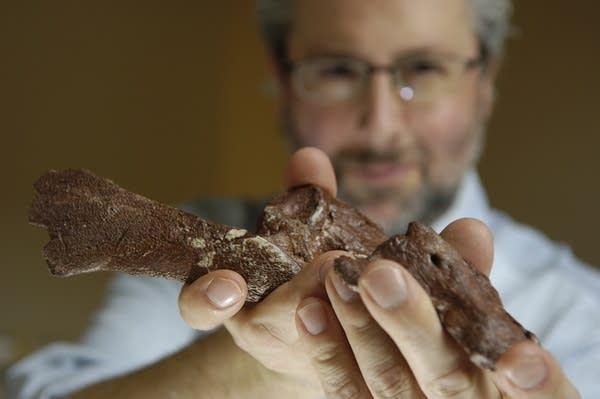 Paleontologist Neil Shubin holds part of a fossil from Tiktaalik.