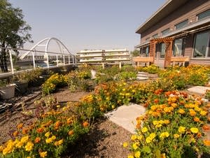 A green roof garden design