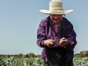 Mao Moua ties rosemary at Hafa Farms.