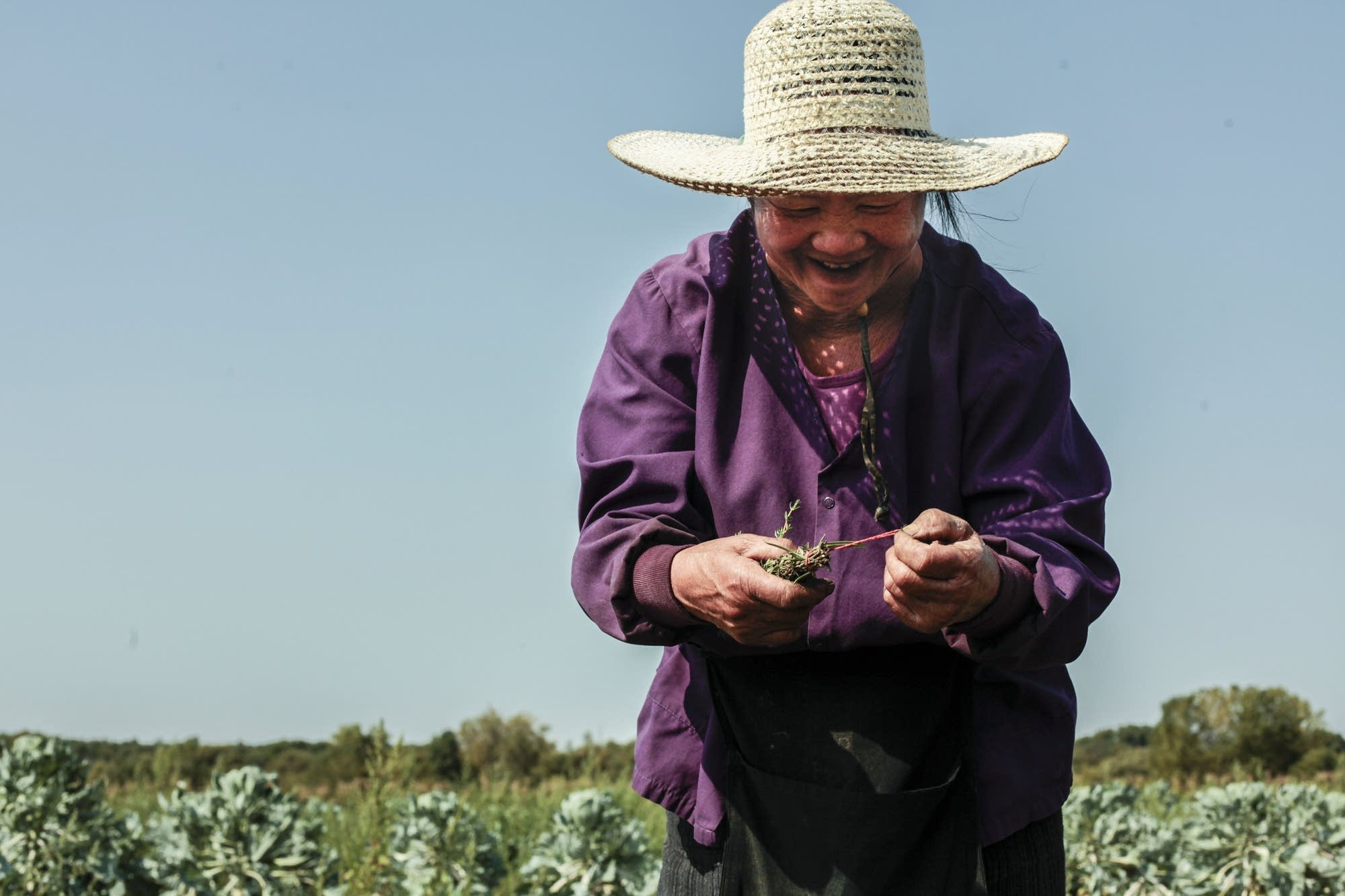 Mao Moua ties rosemary at Hafa Farms.