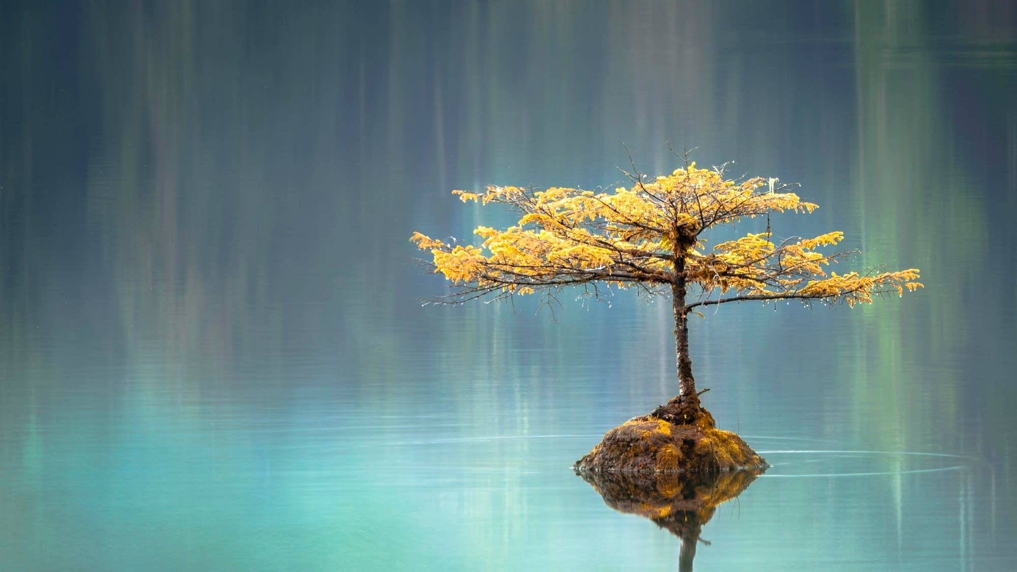 A young sapling emerges from a calm Canadian lake.
