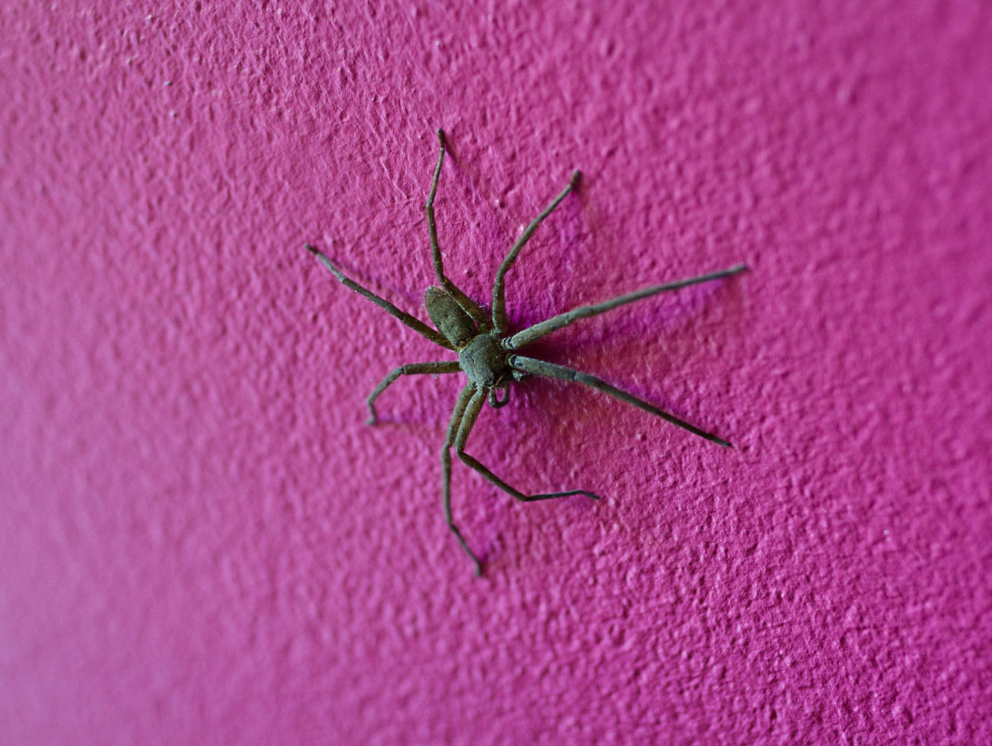 How do spiders walk on walls?