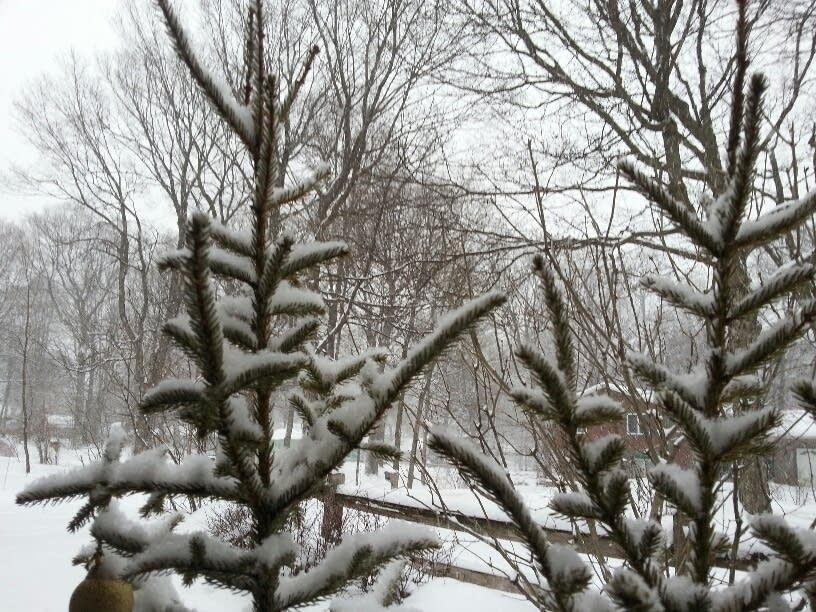 400 snow tree