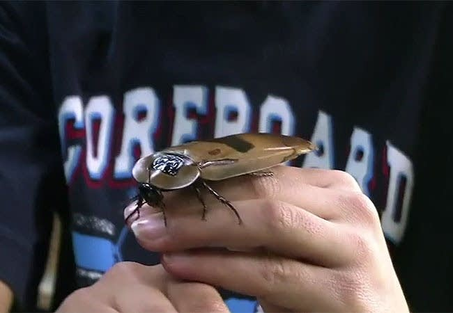 A student handles a giant cockroach