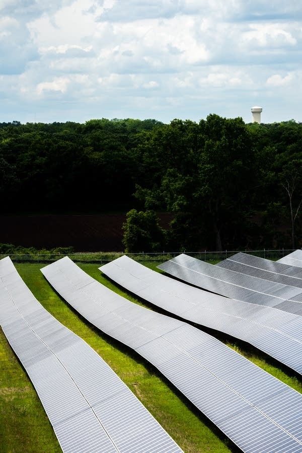 Native pollinator plants grow in between rows of solar panels.