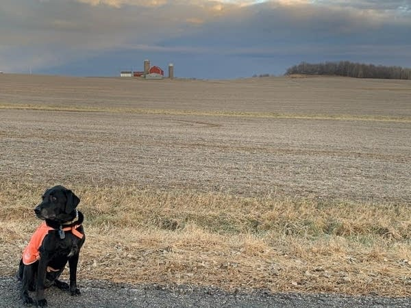 A dog sits in front of a field with a barn in the background.