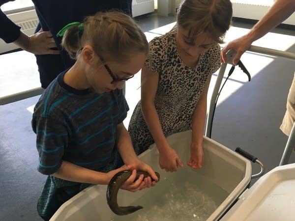 Aquarium lamprey