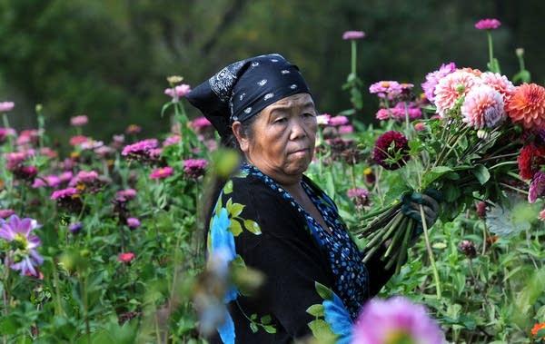 Mai Moua picking flowers