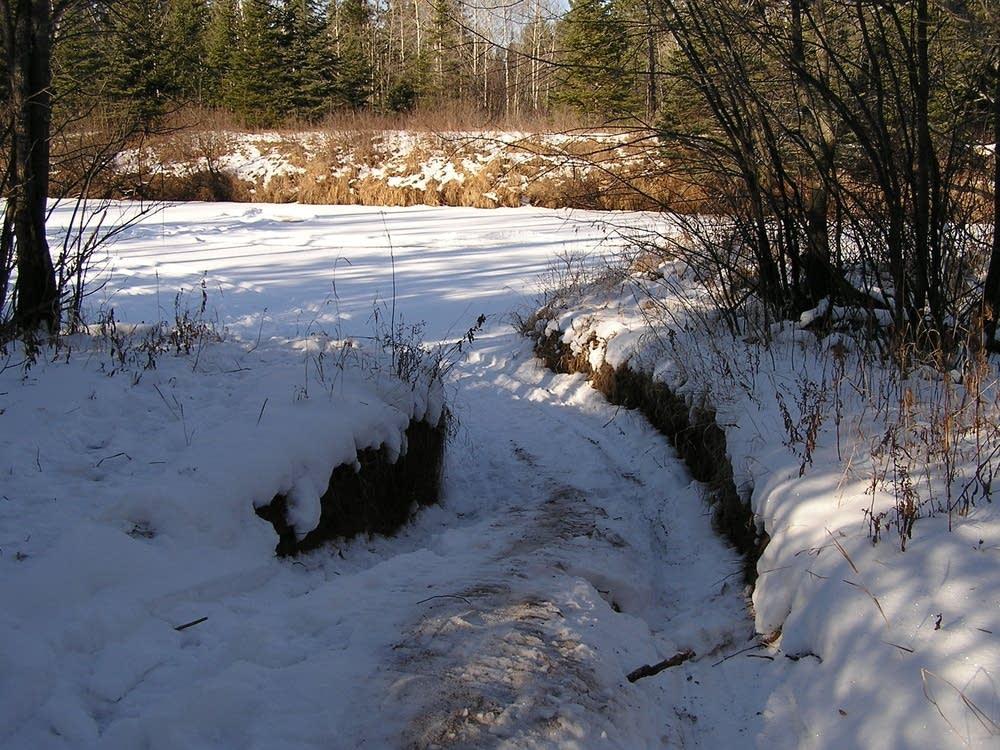 Tracks into the Cloquet River