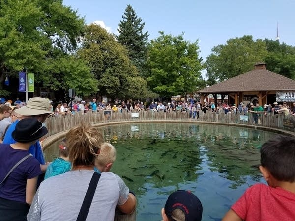 DNR Fish pond at Minnesota State Fair