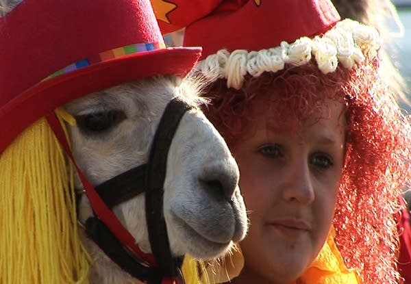 Art Hounds: Llamas in costume at the Minnesota State Fair