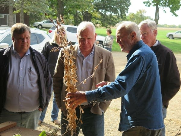 The governor looks at a corn stalk