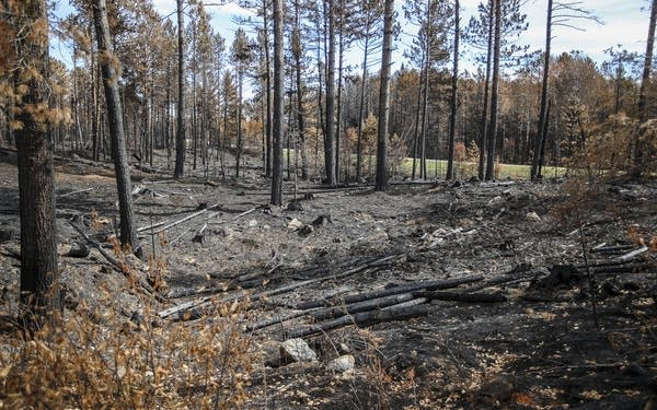 A burned-out area of forest
