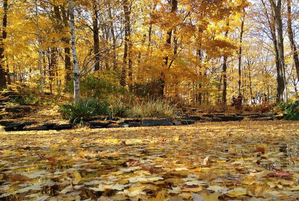 Minnesota Landscape Arboretum in autumn