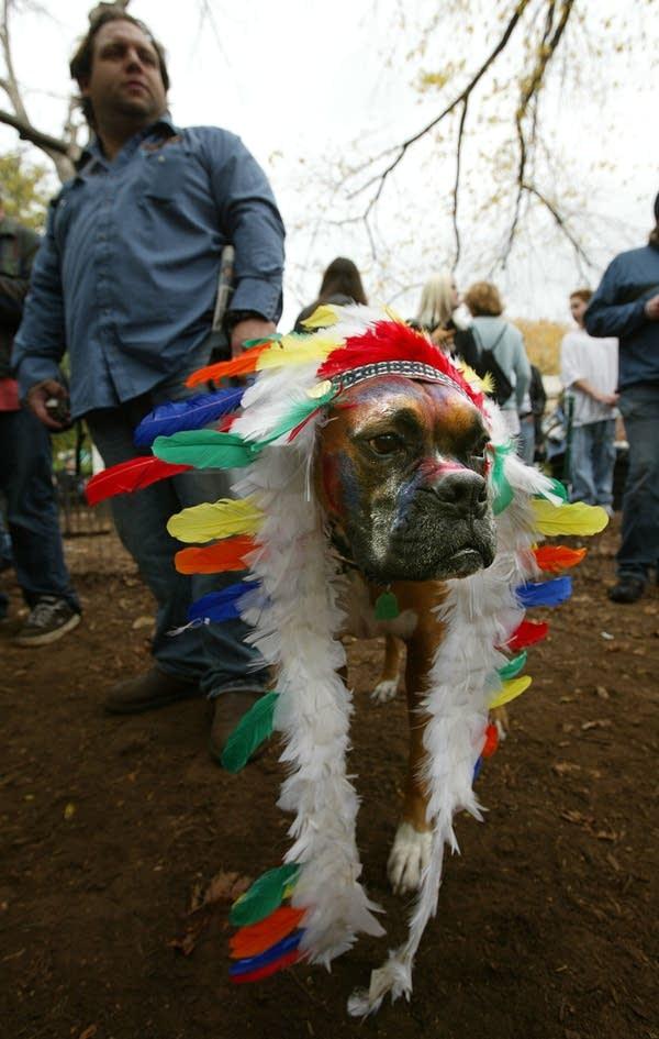 Dog Halloween Parade