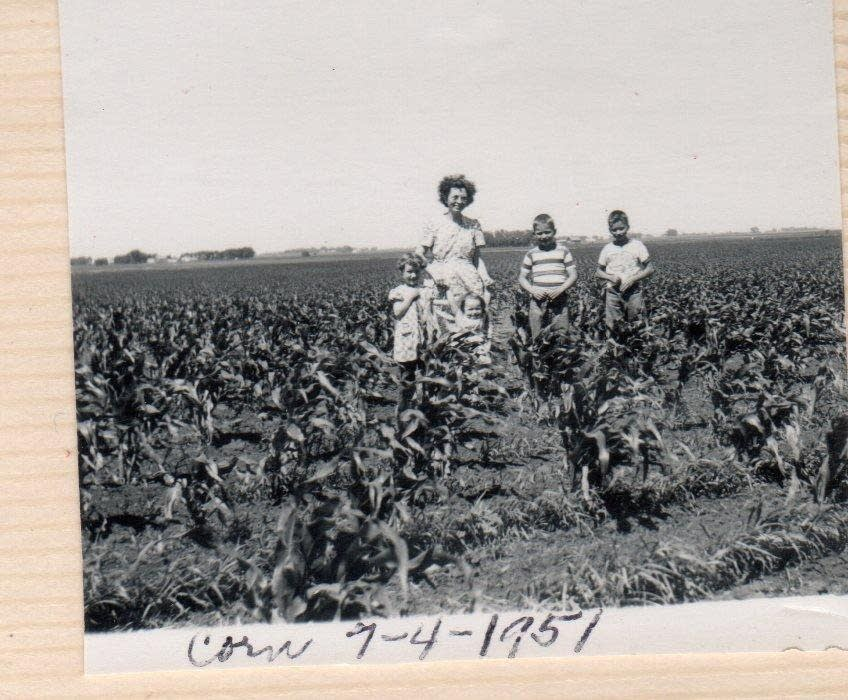 Knee-high corn in 1951