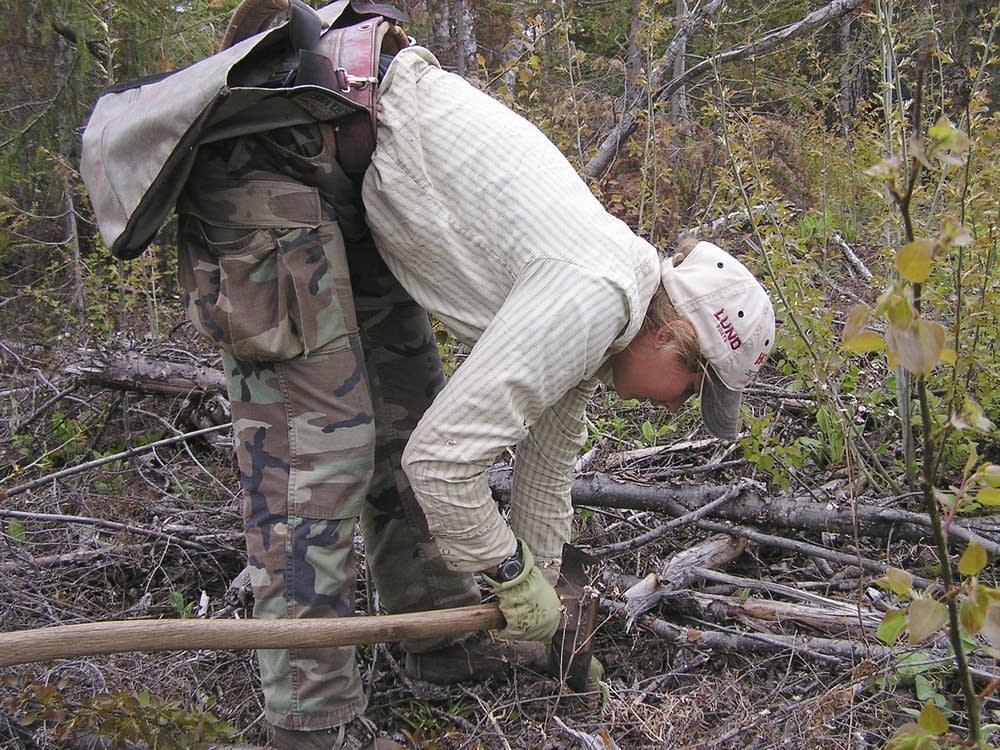 Planting oak trees