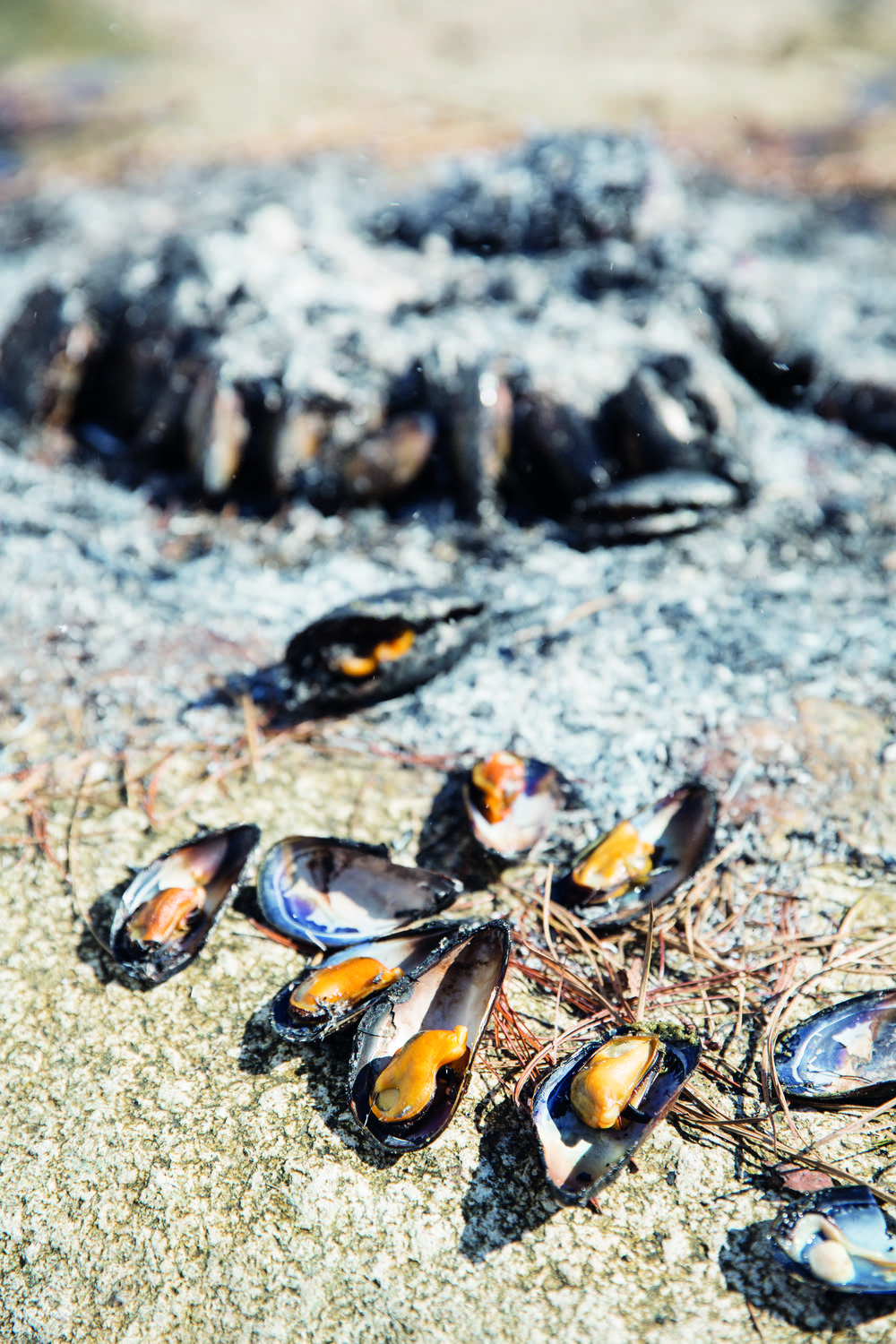 Pine-needle mussels