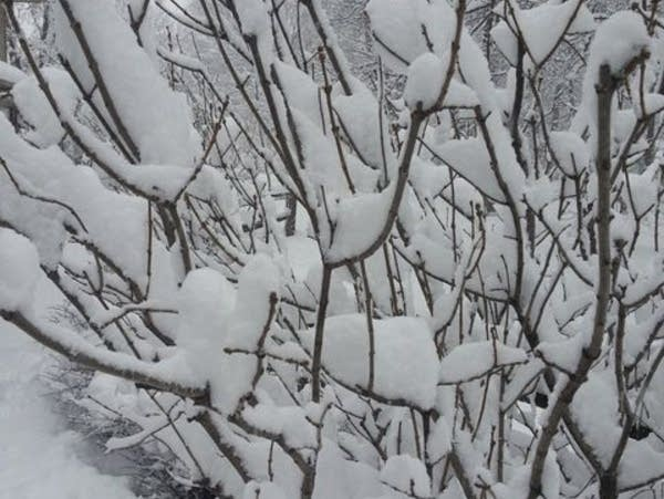 It's a whopper: Biggest snow in nearly 2 years; Cold next | MPR News
