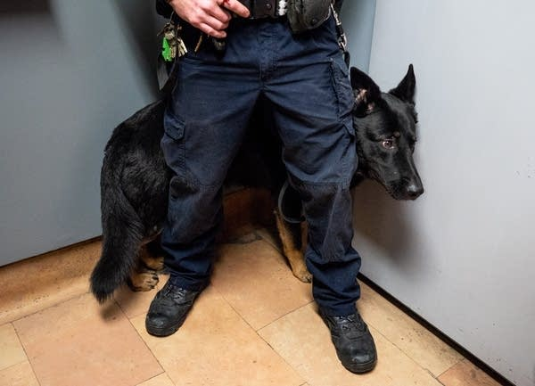 A corrections officer stands in front of a guard dog.