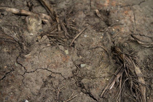 Cracks on the soil show overworked soil.