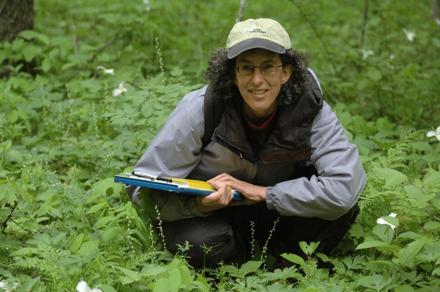 Hannah Texler documents the rare plant Floerkea proserpinacoides.