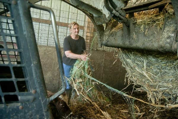 Loretta Jaus takes the netting off a bail of hay.
