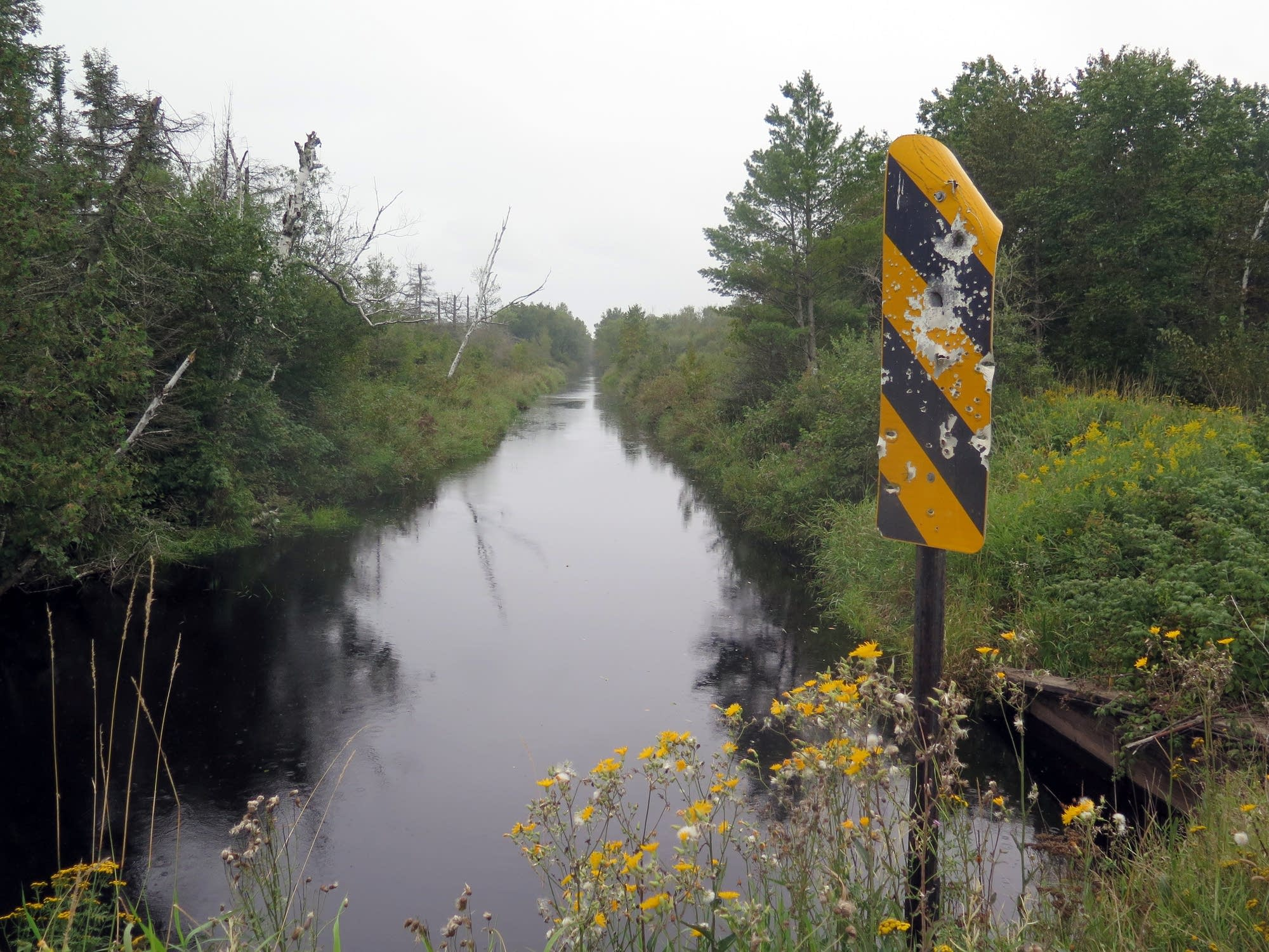 Drainage ditches dug in the 1900s degraded the area's wild rice lakes.