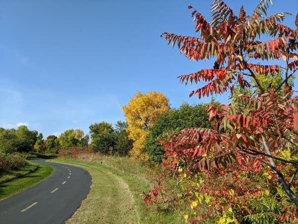 Late September fall color in Carver Park Reserve