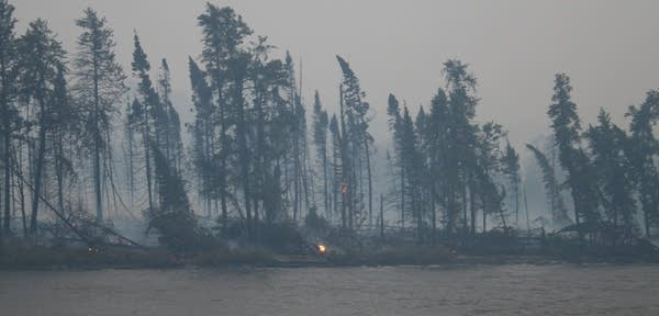 A forest after a wildfire.
