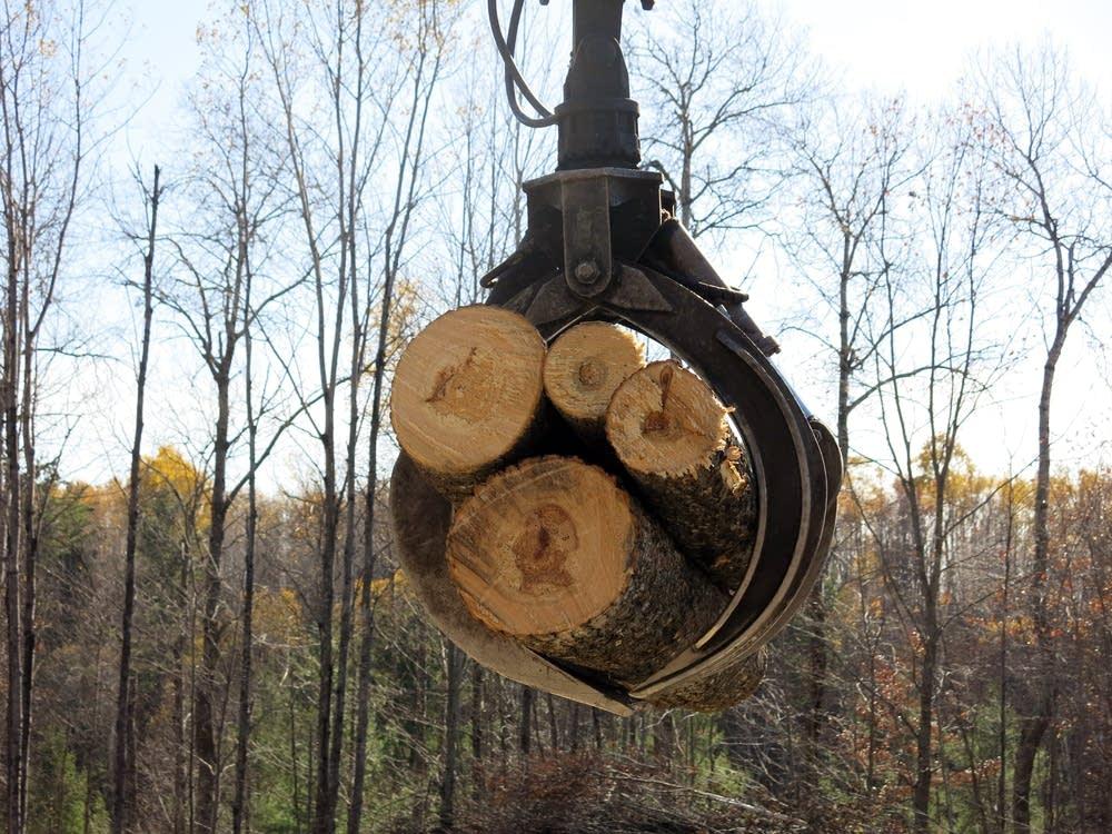 A claw picks up cut logs.