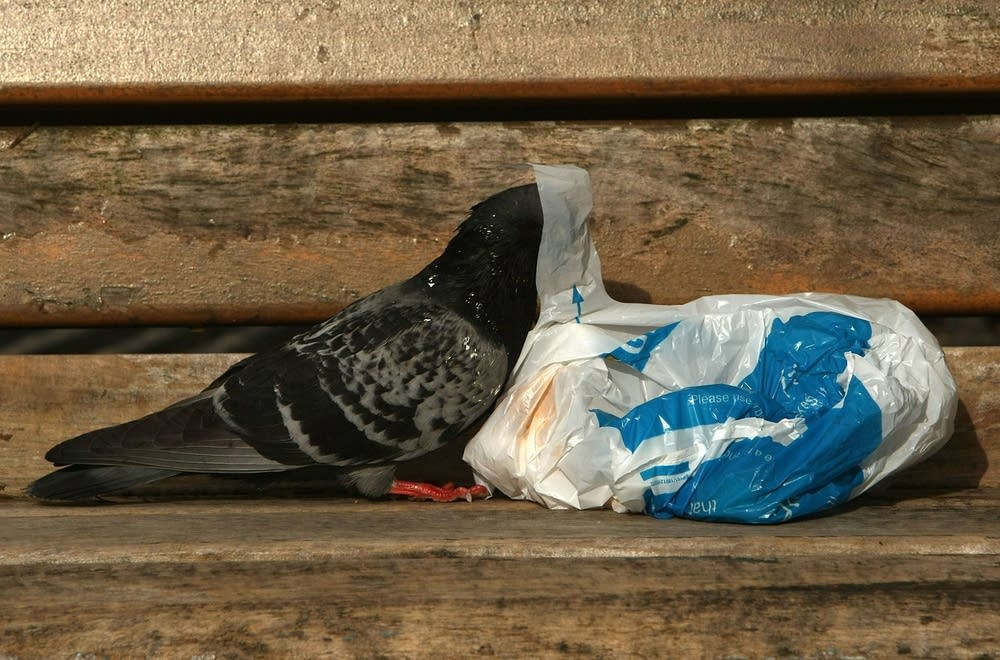 A pigeon looks for food inside a bag