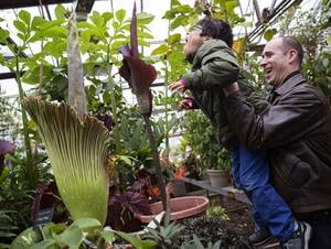 Juan Schlieper reacts to the corpse flower smell with his dad, Erich.