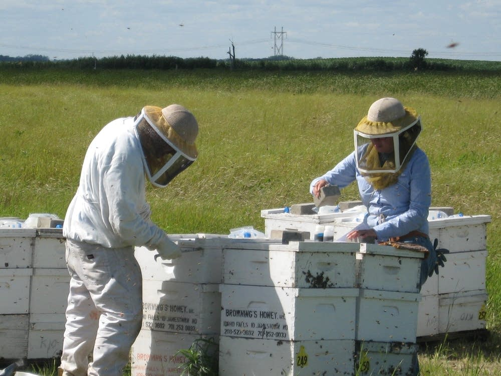 Checking bees
