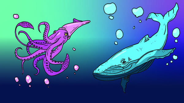 Smash Boom Best: Giant Squid vs Blue Whales