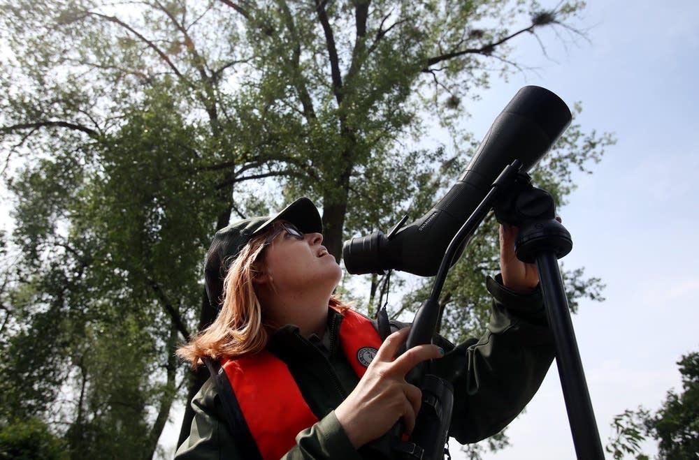 Examining nests