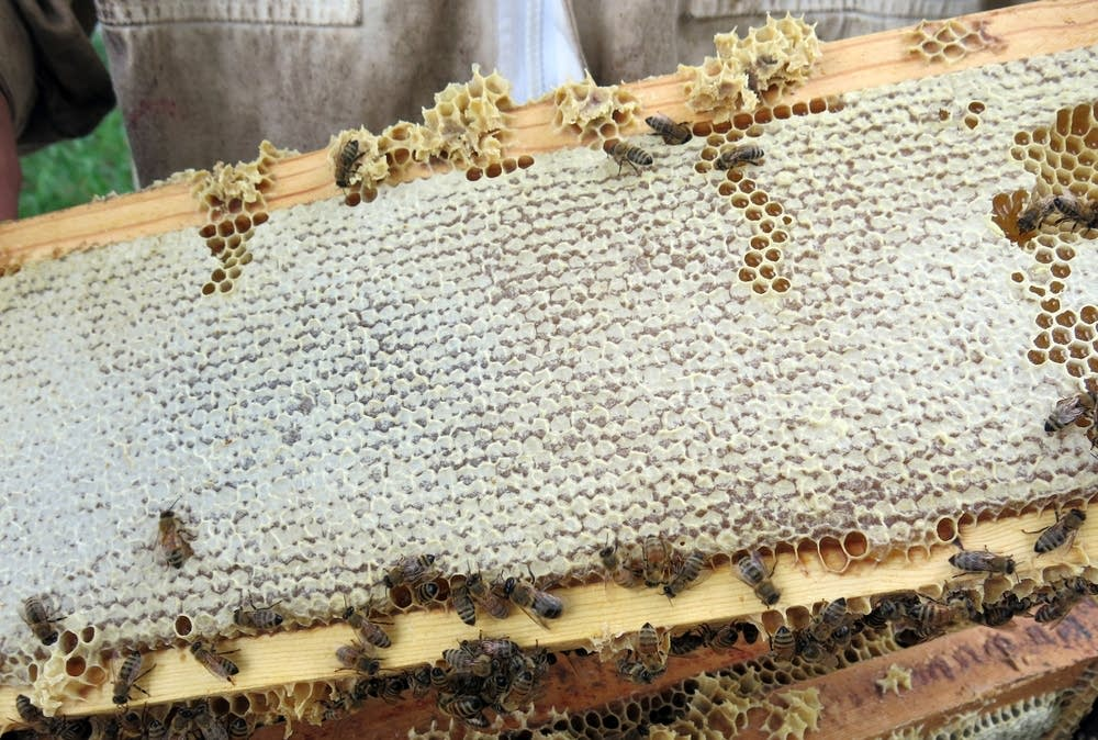 Bees crawled across a frame filled with honey.