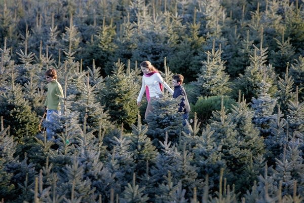 Tree farm in Bluemont, Virginia