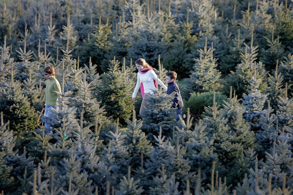 Tree farm in Bluemont, Virginia