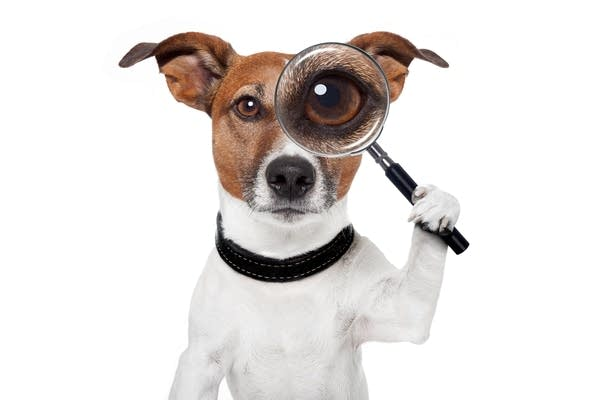 A photo illustration of a dog with a magnifying glass (like a detective)