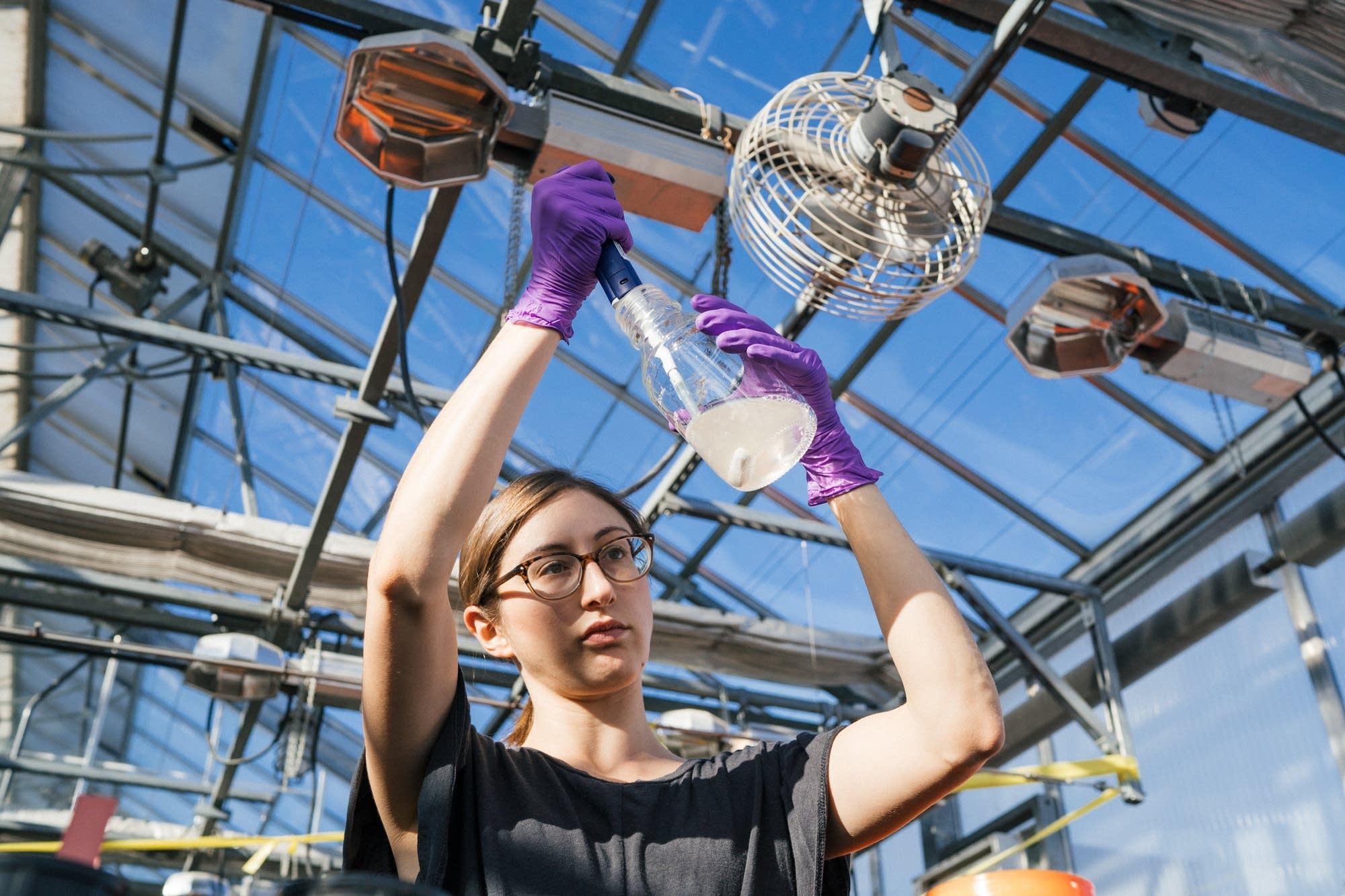 University of Minnesota plant pathology researcher Mariah Dorner.