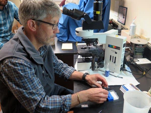 Biologist Mark Edlund preps an algae slide.